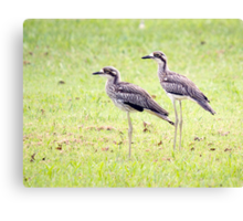 Stand Tall - curlews Canvas Print