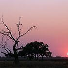 Riverina Sunrise - Wogollow Farm, Benerembah by aussiecreatures