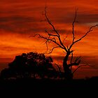 Red Dawn - Wogollow Farm, Benerembah by aussiecreatures