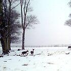 """Oh DEER"" its snowing again! by Merice  Ewart-Marshall - LFA"