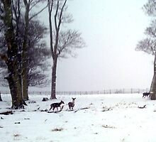 """Oh DEER"" its snowing again! by Merice  Ewart-Marshall - LFA"