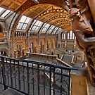 Natural history museum London by Shaun Whiteman