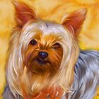 Yorkshire Terrier by Iain McDonald