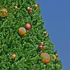 HDR - Christmas Tree and Blue Sky by Doug Greenwald