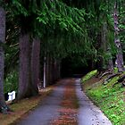 Lonely Walk by Bobbie J. Bonebrake