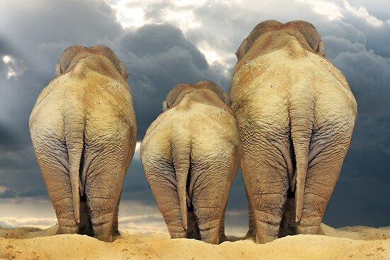 Traveling Elephant Family  by CarolM