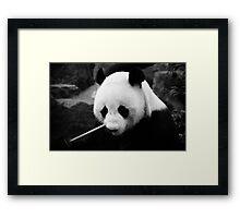 Wang Wang the panda, close up Framed Print