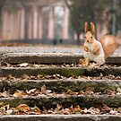 Cute squirrel in autumn forest. Casual meeting by mike2048