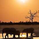 Sundowners, Savute Botswana by Neville Jones