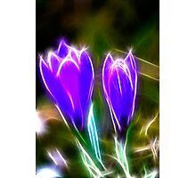 Sparkling Crocus Photographic Print