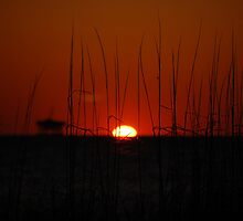 A New Day(for the victims of Hurricane Sandy) by zpawpaw