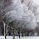 Beautiful snow-laden trees in Hilly Fields Park  by John Gaffen
