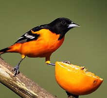 An Orange for Breakfast by Rob Lavoie