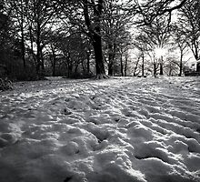 Woods in the snow by KathO