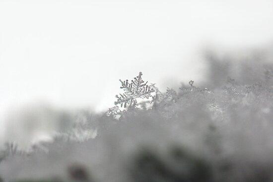 Snow Crystal by alienfunk