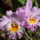 Cattleya Twins by Gail Falcon