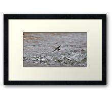 Dipper Over Rough Water Framed Print