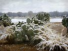 Snow in the Sonoran Desert  by Lucinda Walter