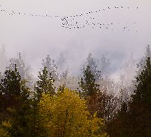 Foggy Morning Fly Over by Diane Schuster