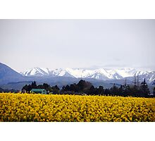 Southern Alps in  Spring Photographic Print