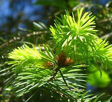 Newborn baby pinecones by Rainydayphotos