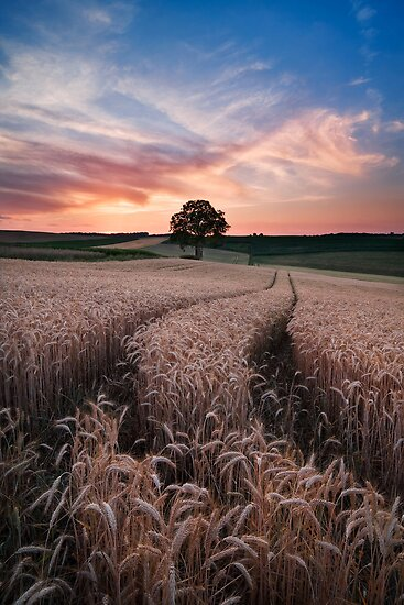 Summer Glow by Michael Breitung