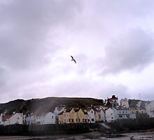 Lone Gull, Over Staithes by Sue Nichol