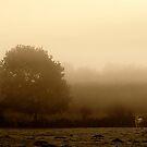 Misty Horsie by Anthony Thomas