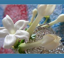 white little jasmine by LisaBeth