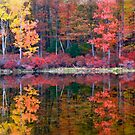 Harriman State Park - New York by Catherine Mardix