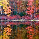 Harriman State Park - New York by Catherine Palmer