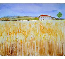 Wheat Fields Photographic Print