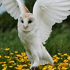 I am a Angel.Gyzmo Barn Owl by Elaine123
