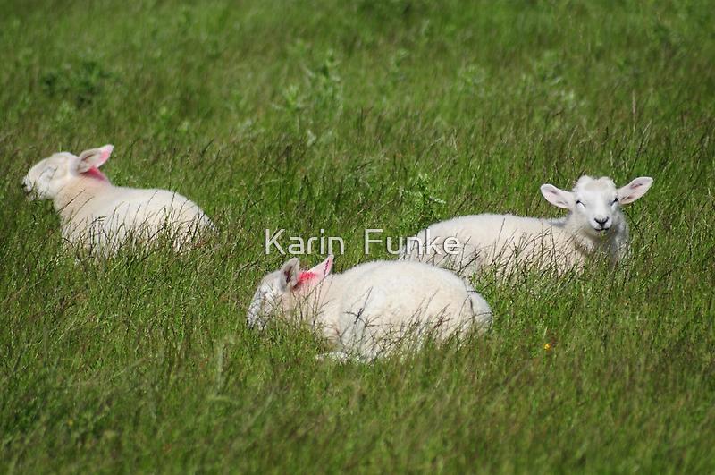 Three Lambs by Karin  Funke