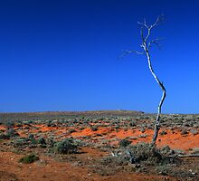 Outback - Lone tree in the desert by Joanne Emery