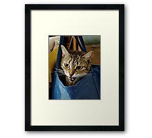 Bag it, Dano Framed Print