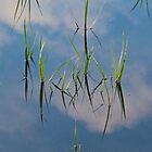 Grass reflections by Barbara Schmaeling