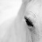 White horse - Camarge, France by Matej Kastelic