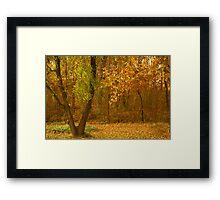 Fall in my Yard Framed Print