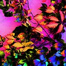 Colorful Leaves by DAdeSimone