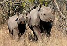 Black Rhino mother and baby (2) (Diceros Bicornis) by Margaret  Hyde