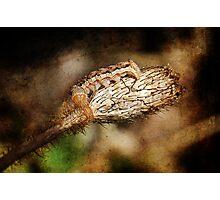 Caterpiller on a Poppy Seedpod Photographic Print