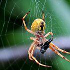 Web Of Deception by John  Kowalski