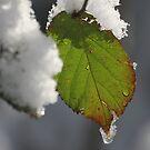 Melting Snow by John Dalkin