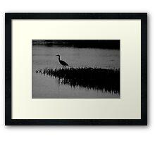 hunting heron Framed Print
