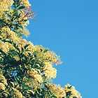 Blossoms and a Blue Sky by Lucy Hale