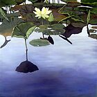 Lily Pond - oil painting by LindaAppleArt