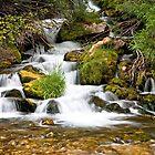 Big Spring on Sheep Creek, Utah by Kim Barton