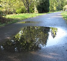 Reflections of the Path You Walk by essenceoview
