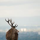 Red Deer 1 by mickeyb